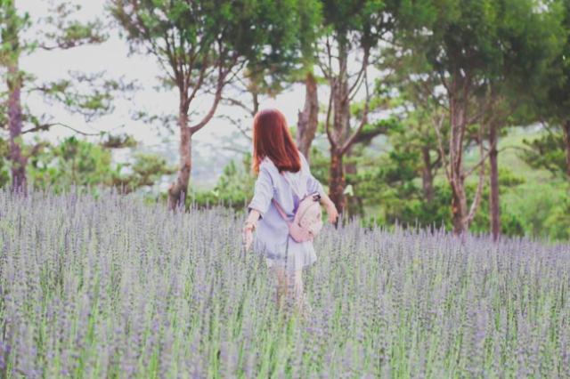 Cánh đồng Lavender Đà Lạt