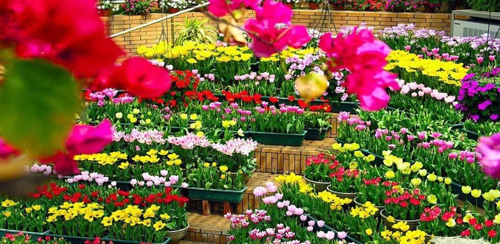 Loài hoa đẹp cuốn hút tại Đà Lạt
