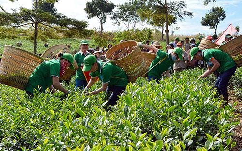 Lễ hội trà Lâm Đồng