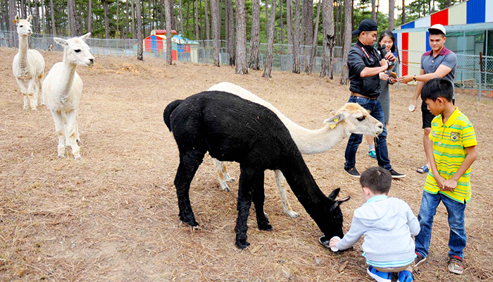 Tour du lịch Đà Lạt trong ngày - Tham quan sở thú ZooDoo Đà Lạt