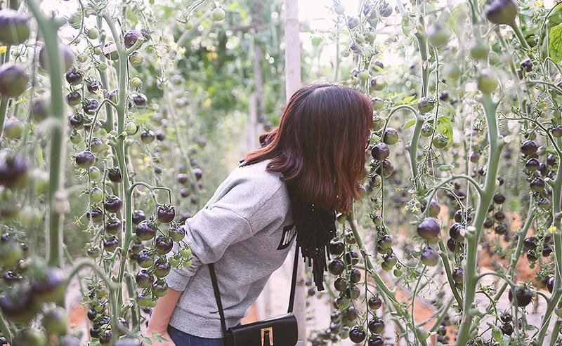 tour sở thú zoodoo - Vườn cà chua đen Đà Lạt